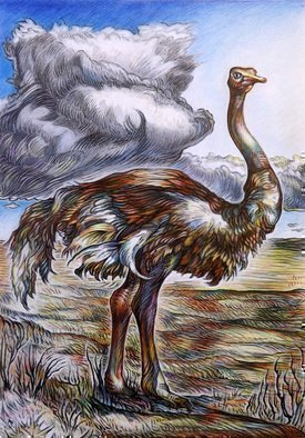 Austen Pinkerton Artwork OSTRICH, 2015 Crayon Drawing, Wildlife