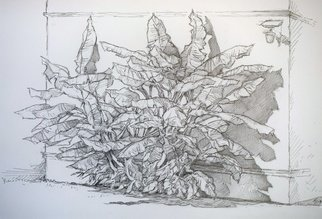 Austen Pinkerton: 'banana palm', 2019 Graphite Drawing, Nature. Loved the sculptural forms of these banana trees in Turkey...