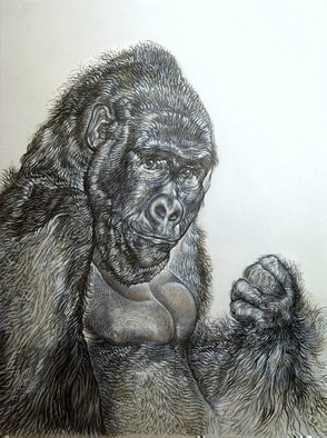 Austen Pinkerton: 'gorilla', 2017 Graphite Drawing, Animals.