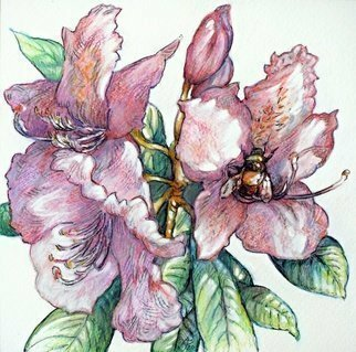 Austen Pinkerton: 'rhododendron and bumble bee', 2020 Watercolor, Floral. Have now finished all five of the flower series of small watercolours, possibly for greetings cards: Number five,  Rhododendron with Bumble Bee ,16 x 16cm, watercolour crayon. ...