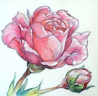Austen Pinkerton: 'rose and bud', 2020 Watercolor, Landscape.  Rose and Bud , Aquarelle crayon, 16 x16cm. Finished last weekend. Second in a  flower  series. ...