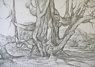 Austen Pinkerton: 'the great twisted tree', 2019 Graphite Drawing, Landscape. Do plants have a soul  Yes of course they do. ...