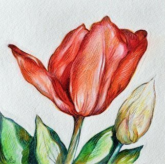 Austen Pinkerton: 'tulip', 2020 Watercolor, Floral. Just finished: Number four in a series of five small flower paintings  possibly as greeting card designs:  Tulip , 16 x 16cm, watercolour crayon. ...