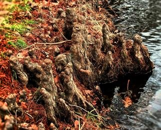 B A Autery: 'figures of roots', 2017 Color Photograph, Landscape. Artist Description: Alien figures of roots coming alive at the water line. landscape, roots, oranges, fall colors, water, waters edge, tree, tree roots...