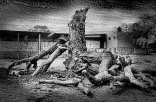 Andrew Xenios: 'Altered Tree', 2012 Black and White Photograph, Representational. Artist Description:    After a lightning bolt hit this tree, nobody in the Mayan village will touch it due to tremendous superstition.  ...