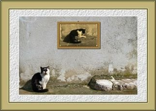 Dragutin Barac Artwork Cat, 2011 Color Photograph, Cats