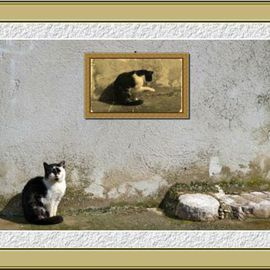 Dragutin Barac: 'Cat', 2011 Color Photograph, Cats. Artist Description:  Photography, photoshop manipulated. ...