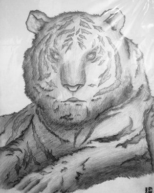Bilal Albar Bayyanullaah: 'lonely tiger', 2018 Pencil Drawing, Animals. Artist Description: Sketch drawing...