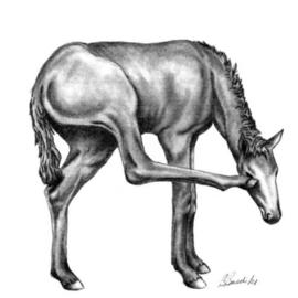 Barbara Busch Artwork First Filly, 2006 Pencil Drawing, Equine