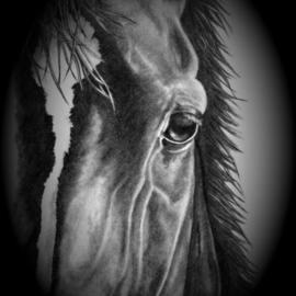 Barbara Busch Artwork Insight, 2006 Pencil Drawing, Equine