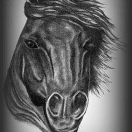 Barbara Busch Artwork Magestic, 2006 Pencil Drawing, Equine