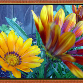 Berit Nelson Artwork Flowers From My Garden, 2006 Color Photograph, Floral