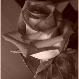 Berit Nelson Artwork Sepia Rose, 2007 Other Photography, Floral