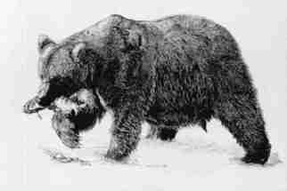 Roberta Ekman Artwork 'Grizzly Bear', 2000. Pen Drawing. Animals. Artist Description: Grizzly bear with a fish in it' s mouth. ......