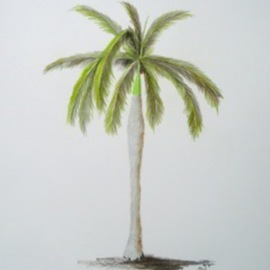 Ron Berry Artwork Royal Palm 2, 2011 Pencil Drawing, Beach