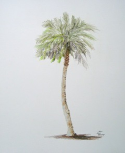 Ron Berry  'Sabal Palm 2', created in 2011, Original Drawing Pencil.