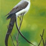 Fork tailed Flycatcher By Betina Haak