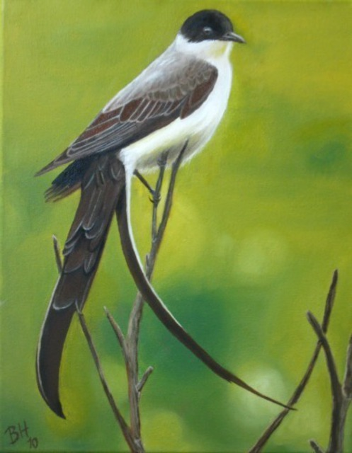 Betina Haak  'Fork Tailed Flycatcher', created in 2011, Original Painting Oil.