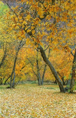 Color Photograph by Bonnie Rannald titled: Autumn Colors at Zion, Utah, 2009