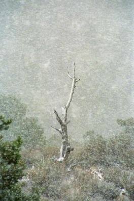 Color Photograph by Bonnie Rannald titled: Snow Tree at La Madre Spring, 1993