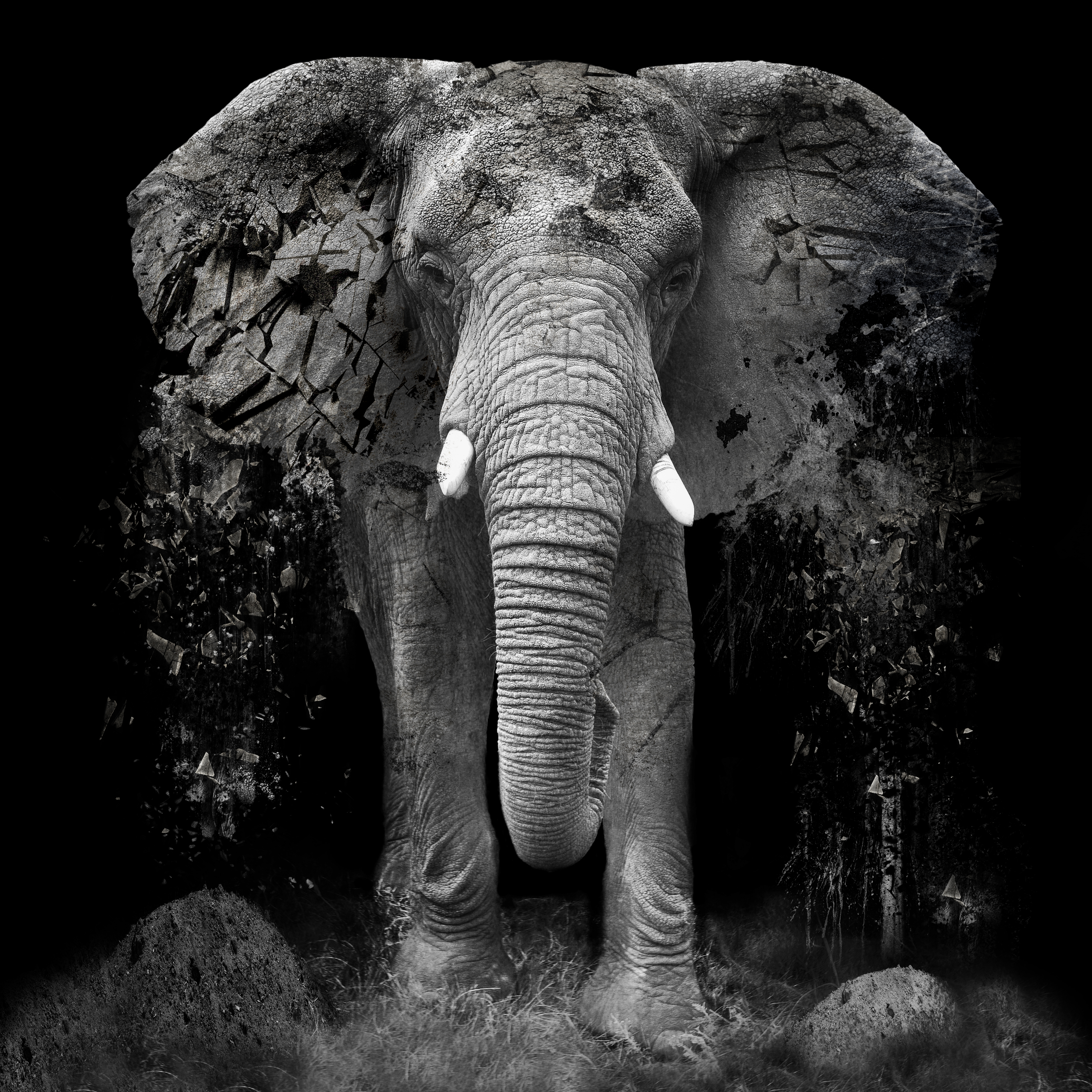 Erik Brede Artwork The Disappearance, 2014 Black and White Photograph, Conceptual