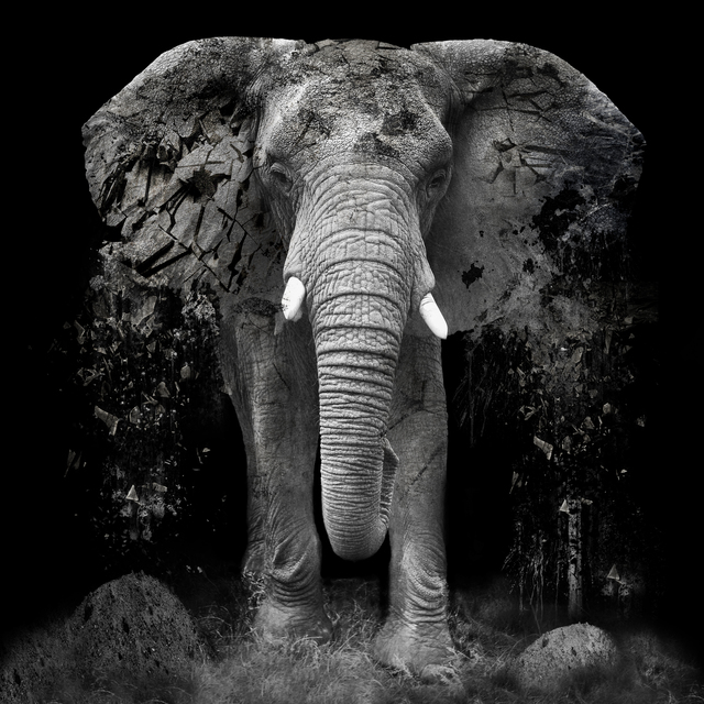 Erik Brede The Disappearance 2014