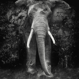 Erik Brede: 'The Disappearance ', 2019 Black and White Photograph, Conceptual. Artist Description: 80x100cm  90x110cm Unframed Pop Art in a limited edition of 10 + 1AP...