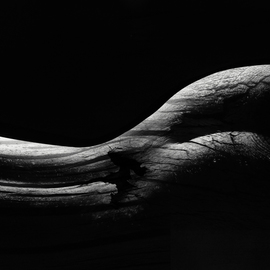 body shape By Erik Brede