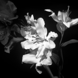 Bruce Panock Artwork Black and White Flowers, 2009 Black and White Photograph, Floral