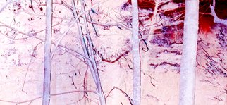 Artist: Bruce Panock - Title: Tree Line - Medium: Color Photograph - Year: 2009