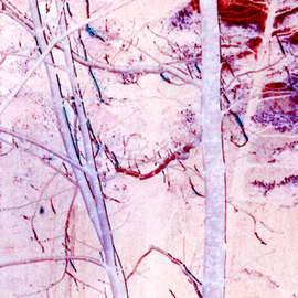 Bruce Panock Artwork Tree Line, 2009 Color Photograph, Abstract