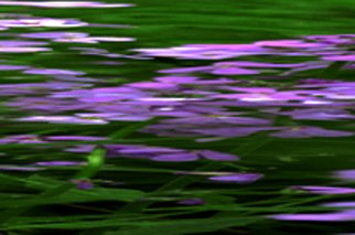 Artist: Bruce Panock - Title: Wildflowers Abstract 1 - Medium: Color Photograph - Year: 2010