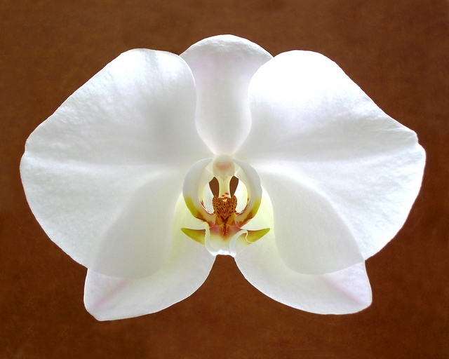 Mike Vukich  'Orchid', created in 2007, Original Photography Color.