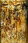Undefined Medium by Bridget Busutil titled: Gold threads in transparency, created in 2008