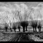 trees By Calin Baban