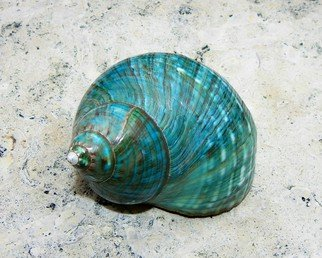 Carolyn Bistline: 'AQUA TURBO SEASHELL', 2013 Color Photograph, Sea Life.