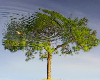Artist: Carolyn Bistline - Title: Reflection of a Tree - Medium: Color Photograph - Year: 2011