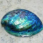 Teal Seashell, Carolyn Bistline