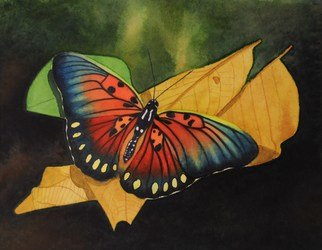 Artist: Carolyn Judge - Title: Edwards Forrester Butterfly - Medium: Watercolor - Year: 2010