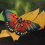 Edwards Forrester Butterfly By Carolyn Judge