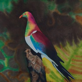 Kereru, Carolyn Judge