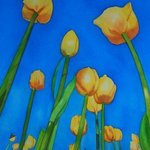 Tulips By Carolyn Judge