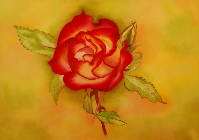 Carolyn Judge  'Velvet Rose', created in 2010, Original Watercolor.