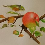 Waxeye And Apple, Carolyn Judge