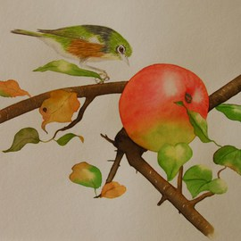 Waxeye and apple By Carolyn Judge