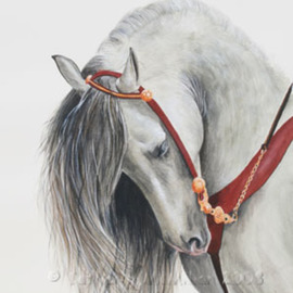Catherin Mcmillan Artwork Equis, 2008 Watercolor, Equine