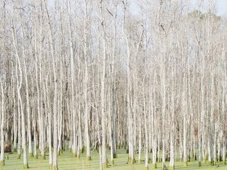 Celeste Mccullough: 'Bright Trees', 2014 Color Photograph, Landscape. Artist Description:  Forest of white trees in a green swamp.    ...
