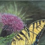 Butterfly on Thistle By Cheryl Johnson