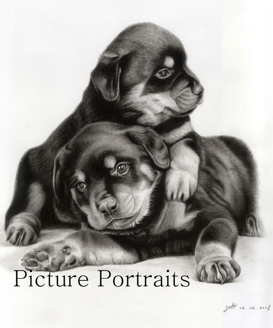 Artist Jade Zhang. 'Two Cute Little Rotties' Artwork Image, Created in 2008, Original Drawing Charcoal. #art #artist
