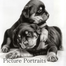 Two cute little rotties By Jade Zhang